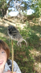 Rodentia on a stick