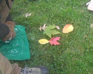 leaf_game_robin_circle