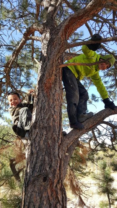 Happy Bobcats in a Tree!