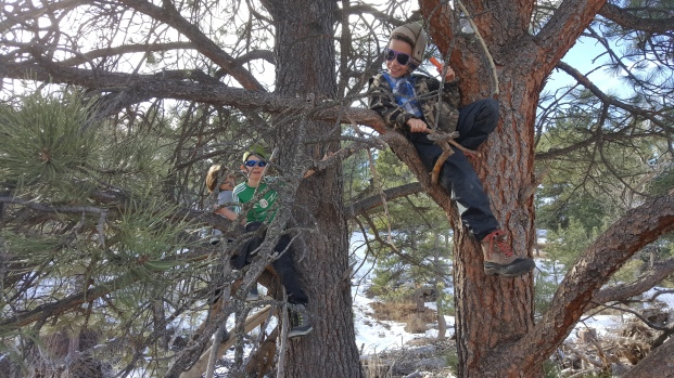 3 Bobcats chilling in the trees